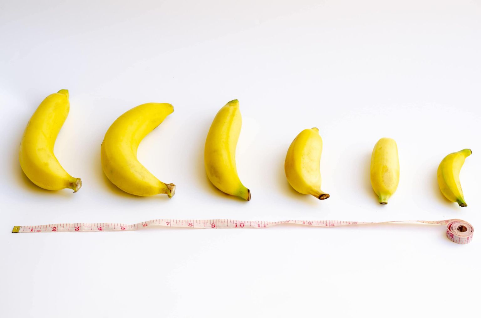 Пенисы разных размеров