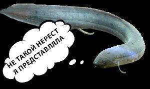 Лучше бы родилась золотой рыбкой